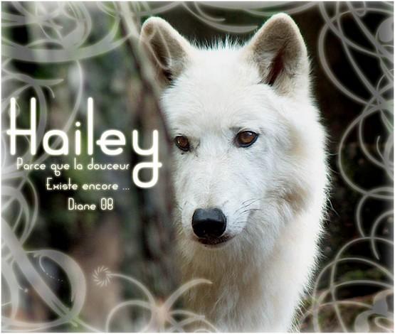 Hailey - Ouranos - Libre Hailey