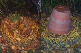 Comment pailler un palmier ou un bananier dans mon jardin jardinage de mon jardin - Comment couper un palmier mort ...