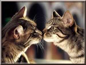 chats amoureux ici